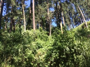 Dense foliage all along the roads from Nuwara Eliya to Hikkaduwa